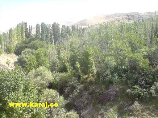 کرج - درختان و باغات جاده ی کردان به برغان